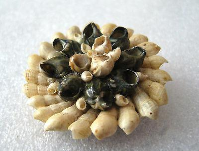 Vintage Israeli shells pin / brooch marked with taxes label